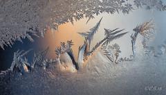 Frost # 36 (claudiaulrikegoodall) Tags: