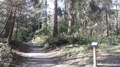 20160331_091842 (ks_bluechip) Tags: creek evans trails preserve sammamish usa2106