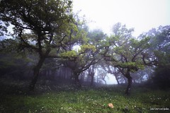 Bosque (javiercollado) Tags: travel espaa spain paisaje andalucia algeciras 2016 estrechodegibraltar natraleza nikond750