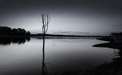 North Pine Dam ( mono ) (ashley2058) Tags: sunset tree water canon blackwhite australia brisbane queensland 5ds tse24