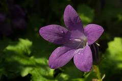 garden 1 (christianhorvath339) Tags: flowers green nature water garden austria outdoor natur blume garten ef2470mm canon6d