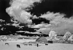 down on the farm IV (eDDie_TK) Tags: rural ir colorado farming loveland co infrared farms ranching rurallife ruralliving ranches lovelandco larimercounty larimercountyco