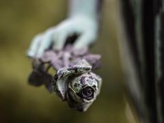 The Rose (marionrosengarten) Tags: friedhof grave rose statue stone nikon peace dof hand cemetary figure grab eternity figur tiefenschrfe