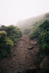 Tam (Nicholas_Luvaul) Tags: leica m6 classic voigtlander 35mm 25 color skopar kodak portra 400 bay area north mt tamalpais nature hiking fog enchanted mystical forest woods trail