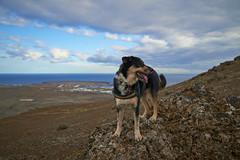 4mai_Thorbjorn_076 (Stefn H. Kristinsson) Tags: dog mountain dogs iceland spring hiking may ma vor hundur sland ganga fjallganga tamron2875mm grindavk hundar grindavik orbjrn nikond800 thornbjorn orbjarnarfell