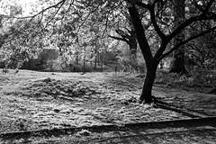 XT1-04-31-15-254-2 (a.cadore) Tags: nyc newyorkcity blackandwhite bw zeiss landscape centralpark uptown fujifilm uws carlzeiss xt1 biogont2828 zeissbiogon28mmf28 fujifilmxt1