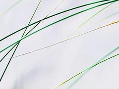 Decline.jpg (Klaus Ressmann) Tags: summer abstract beach grass design minimal klaus omd em1 ressmann omdem1 flcabsnat foleron klausressmann