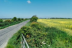 Wide Open Space (Simon_Bates) Tags: cyclingleinster 2016 28mm ireland leica m9 wexford agriculture cycling green journey landscape rapeseed road route route1 simonbates sky summer wideopenspace travel