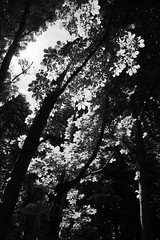 fractal (fintanbrowne) Tags: leaves fuji chestnut