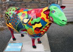 Heather (Cumberland Patriot) Tags: school outdoors sheep heather painted go cumbria trust calvert ewe braithwaite cumbrian herdwick goherdwick