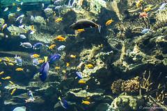 Oceanrio de Lisboa 2 (gorgar671) Tags: ocean fish portugal canon de eos aquarium wasser lisboa tier oceanrio fische unterwasser photografie 650d