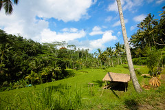 IMG_0813 (hgis) Tags: bali green nature beautiful field rural indonesia landscape island rice paddy terrace tropical