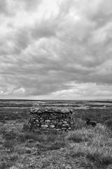 KeighleyMoor_19 (atkiteach) Tags: blackandwhite rural pen walking bradford sheep moors fold westyorkshire dogwalking moorland penfold keighley keighleymoor hiddenbradford hiddenbradfordyorkshire