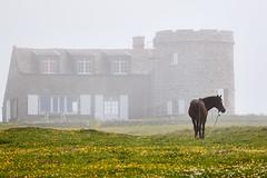 Ancien moulin et cheval dans la brume (ijmd) Tags: paysage landscape france bretagne ledebatz
