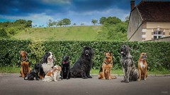 Family photo :) (pixlilli) Tags: family chien dogs campagne dogsphotography