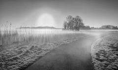 April bright (Jorden Esser) Tags: trees blackandwhite mist reed monochrome grass misty fog sunrise landscape foggy halo grassland hss sundawn middendelfland eyeinthesky nederlandvandaag sliderssunday