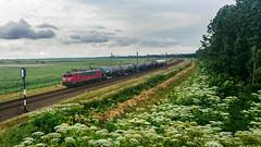 DB-Cargo 1600 Praamweg Lelystad (Nederland)