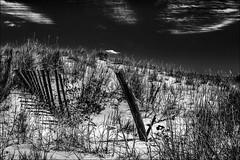 Dune du delta (vedebe) Tags: noiretblanc netb nb bw monochrome portsaintlouisdurhne rhne mer mediterrane sable plage camargue paysages barrieres ombres ombre
