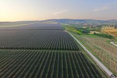 Vinarija Deuri (AleksandarM021) Tags: vojvodina serbia srbija serbiaandmontenegro serbianculture blue novisad nature vinarija srem fruskagora fruskogorski vinski put vino turizam agriculture field