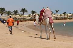 IMG_2970_Hurghada 2016 the best of (Adam Is A D.j.) Tags: wismec vape hurghada egypt red sea mahmya desert rose resorts travel beach sun nature canon 5d mark iii 700d