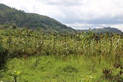 DR Congo Artisanal Gold Mining (UNEP Disasters & Conflicts) Tags: drcongo mining unenvironment uneppcdmb field unep artisanalgoldmining artisanalmining southkivu butuzi easterndrcongo monusco partnershipafricacanada pac 2016