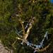 Trees_of_Loop_360_2014_069