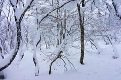 _DSC1052 (Gansan00) Tags: winter sky sun snow japan landscape glow sony hiroshima snowboard      ilce7r