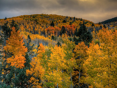 Fall Color at Santa Fe Ski Basin, New Mexico (Beau Rogers) Tags: autumn newmexico fallcolor rockymountains aspen santafeskibasin