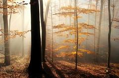 ThisLightIsForYouToday (BphotoR) Tags: christmas november autumn light fog forest canon germany weihnachten woods peace nebel hessen herbst frieden powershot blessing bliss wald odenwald segen g10 weschnitztal bphotor mffp