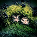 Hamster Duo