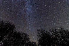 Milky Way through the Trees (sam & anne hong) Tags: statepark sky night stars pennsylvania astrophotography starry stardust milkyway