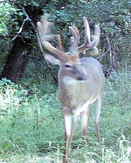 Kansas Trophy Whitetail Bow Hunt 40
