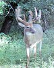 Kansas Trophy Whitetail Bow Hunt 40