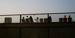 (Allisonsheep) Tags: garden hongkong roofgarden kowloonbay kaitakcruiseterminal