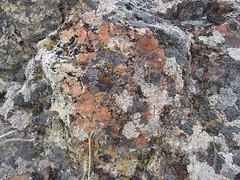 Steptoe Butte (thomas alan) Tags: lichen palouse steptoebutte