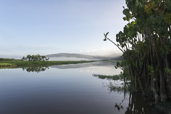 Marais de Kaw (Jrme Le Gousse) Tags: french swamp marais kaw guyane guiana roura