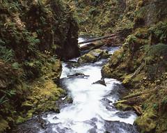 Sol Duc Run (ErikHGPhoto) Tags: park green mamiya film sol analog forest river washington northwest hike explore national wa medium format olympic pnw provia duc rb67