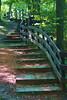 Going up (haidarism (Home Sweet Home)) Tags: trees nature up fence steps down اليوم سلم الغد شجر درج نسيان سور صعود الأمس كبيعة