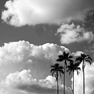 Clouds & Coqueiros
