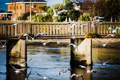 Flock (swingking85) Tags: bridge autumn ireland seagulls nature birds canon river mark flock ii 5d wicklow 70200 wicklowtown 5dmarkii