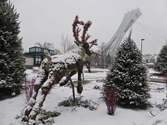 At the Botanical Gardens/ Au Jardin Botanique (anng48) Tags: snow canada quebec montreal neige botanicalgardens olympicstadium qc stadeolympique jardinbotaniquedemontreal