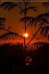 Sun (LuisLimaFotografia) Tags: light luz sol portugal photography photo nikon lisboa lisbon sigma paisagem normal lissabon paisagens lisbonne lisbona nikond90 ilustrarportugal