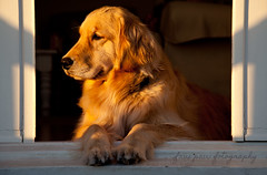 1/52/2015 - Charlie (mm.jane) Tags: dogs for weeks 52