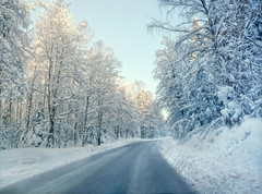 In the winter splendor (Bessula) Tags: road winter light sky snow nature forest season sweden zima śnieg coth bessula coth5