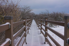Wooden Bridge, Mount Hallasan (sydbad) Tags: bridge winter 35mm wooden sony mount fe southkorea f28 hallasan sonnar sonya7
