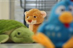 Welcome to the jungle (((JC)) Jlio Carvalho) Tags: chicken kids toy toys galinha turtle lion jungle jc tartaruga leo brinquedos pelcia
