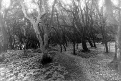 haunted forest (P. Marion) Tags: forest nikon d70 ghost haunted creepy fairy pm fe fort fantme marione