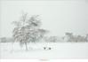 Sneeuwbui op de Stippelberg (NH020466) (nandOOnline) Tags: winter bomen sneeuw nederland natuur boom landschap sneeuwvlokken rips sneeuwbui nbrabant stippelberg