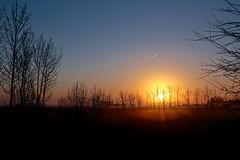 morning light (bnicoll2020) Tags: blue light sky sun mist colour tree netherlands yellow sunrise landscape horizon rays