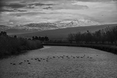orthern Israel - Hula Valley 4 (Avi Morag) Tags: israel hula valley 2015 mounthermon   hulavalley avimorag